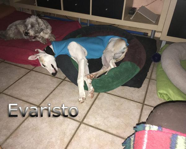 Evaristo (8)