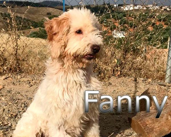 FANI-009