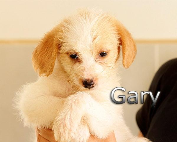 GARY-003