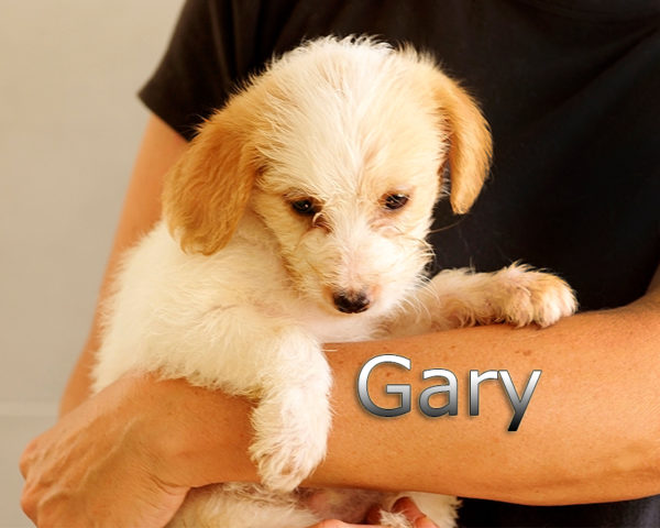 GARY-004