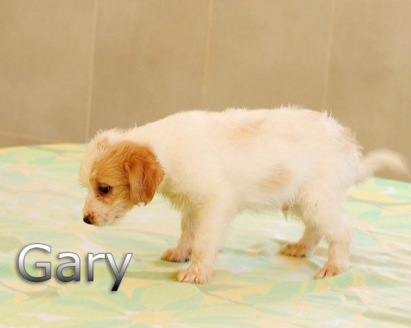 GARY-006