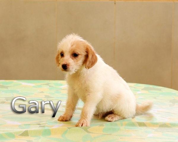 GARY-007
