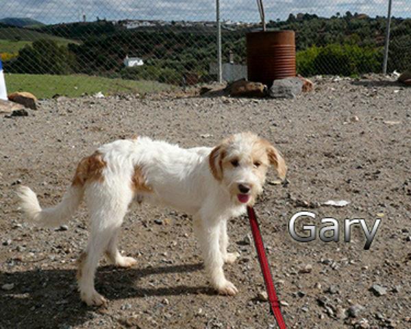GARY-012web