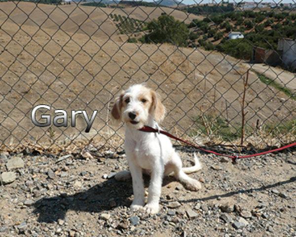 GARY-013web