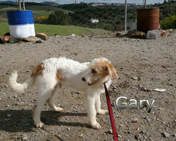 GARY-014web