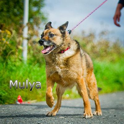 Mulya-(2)web