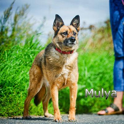 Mulya-(3)web