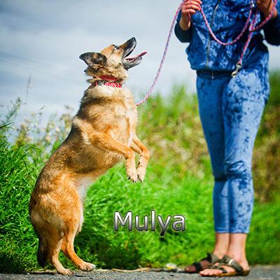 Mulya-(5)web