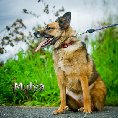 Mulya-(8)web