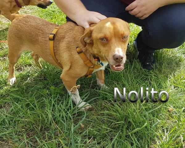 Nolito1