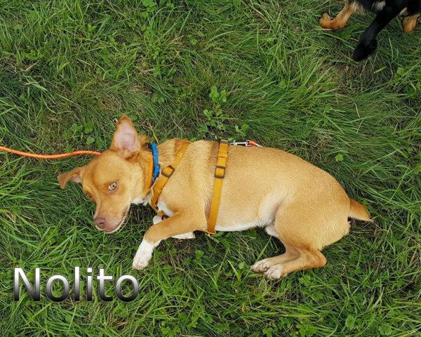 Nolito2