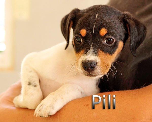PILI-(3)
