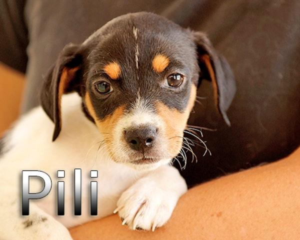 PILI-(4)