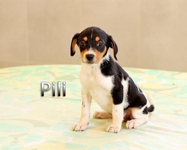 PILI-(5)
