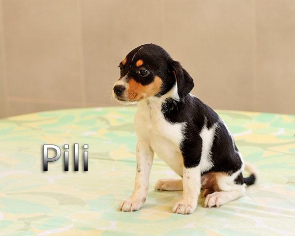 PILI-(8)