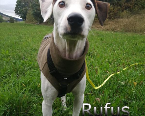 Rufus2