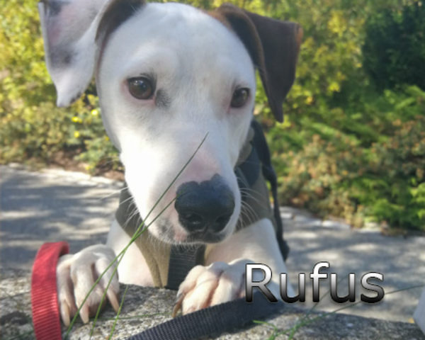 Rufus3