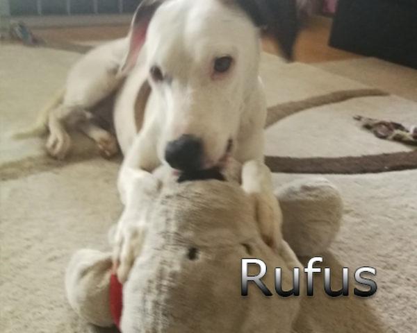 Rufus4