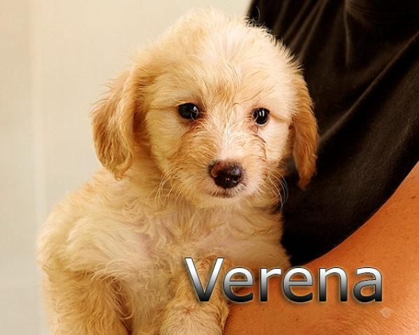 VERENA-001