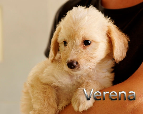 VERENA-002