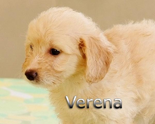 VERENA-003