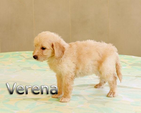 VERENA-004