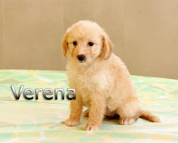VERENA-005