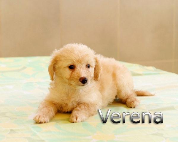 VERENA-006