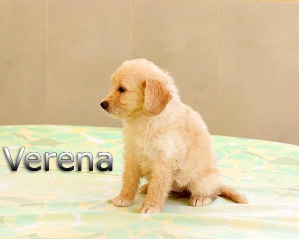 VERENA-007