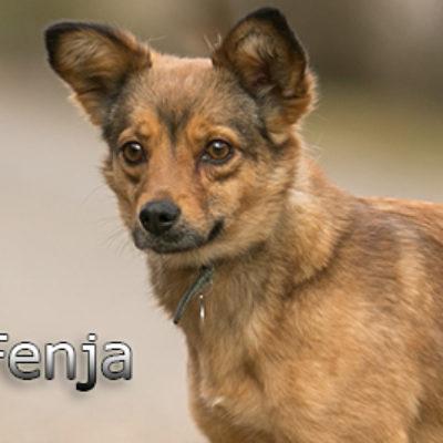 Fenja-(5)web
