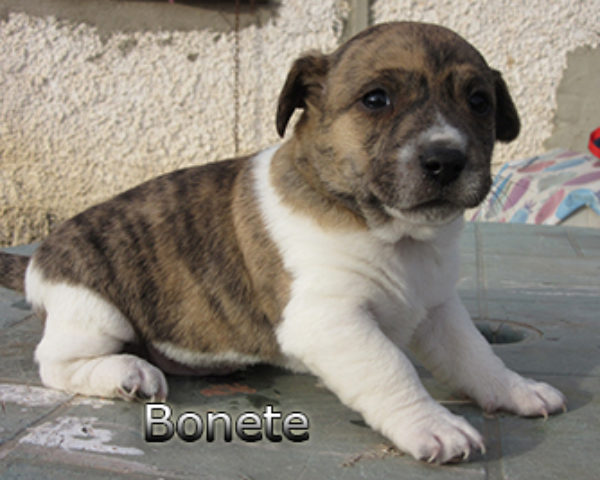 Bonete-(2)web