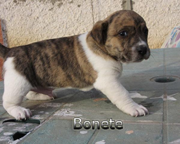 Bonete-(6)web