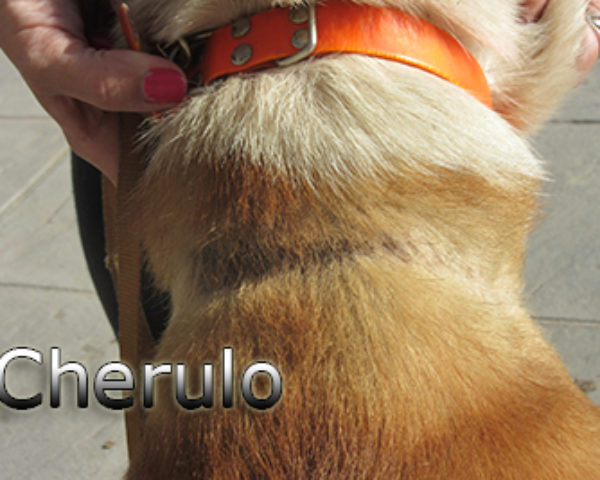 Cherulo-(10)web
