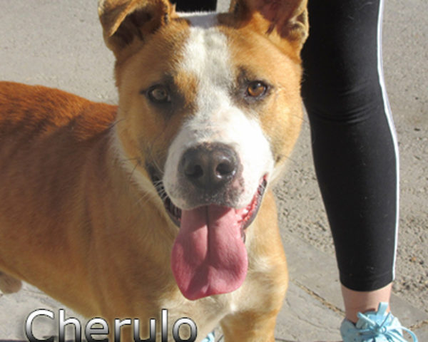 Cherulo-(3)web