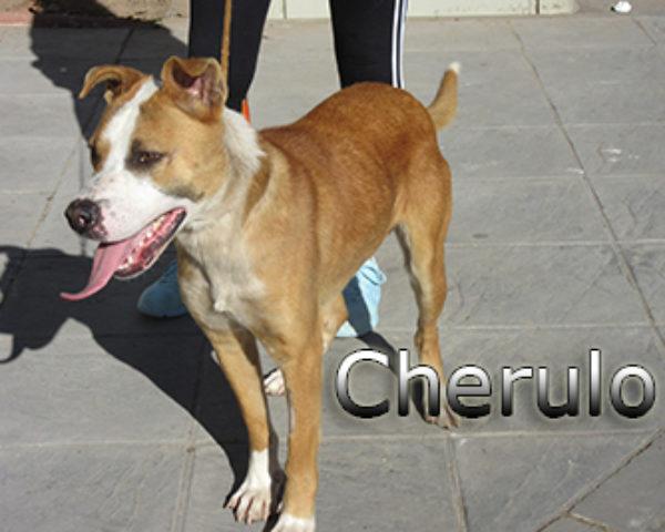 Cherulo-(6)web
