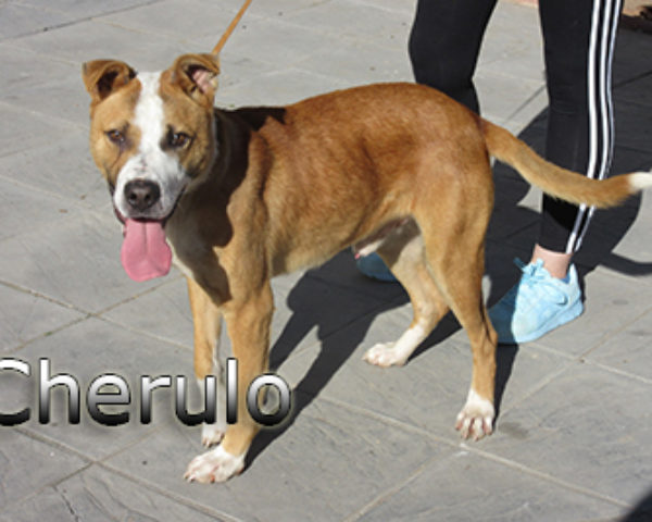 Cherulo-(7)web