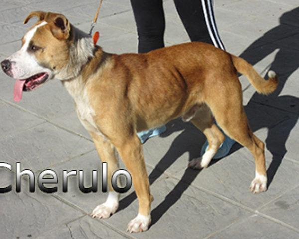 Cherulo-(9)web