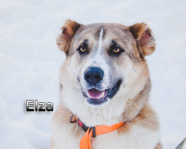 Elza5web