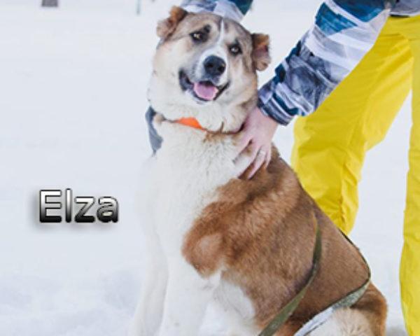 Elza6web