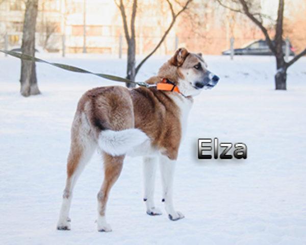 Elza8web