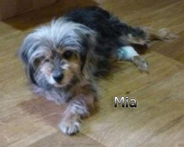 Mia-(10)web
