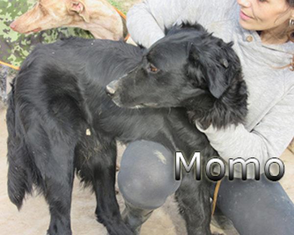 Momo-(13)web