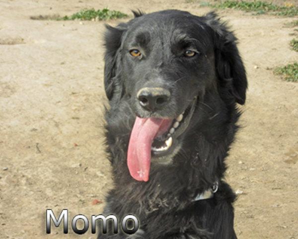 Momo-(1)web