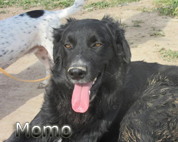 Momo-(6)web