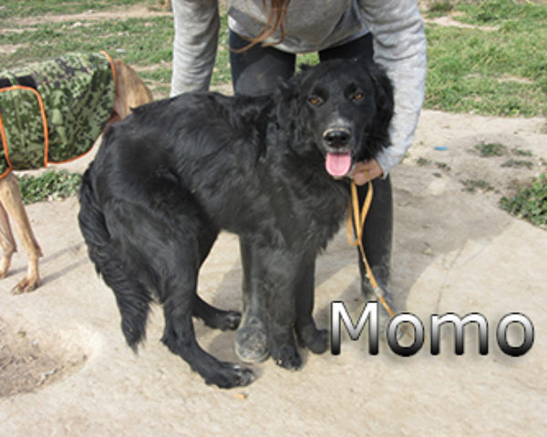 Momo-(8)web