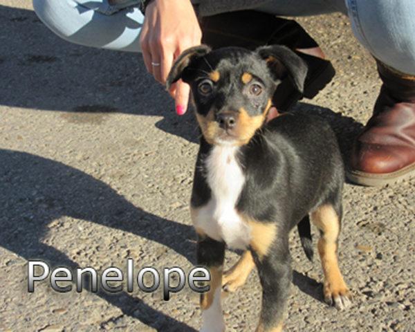 Penelope-(3)web