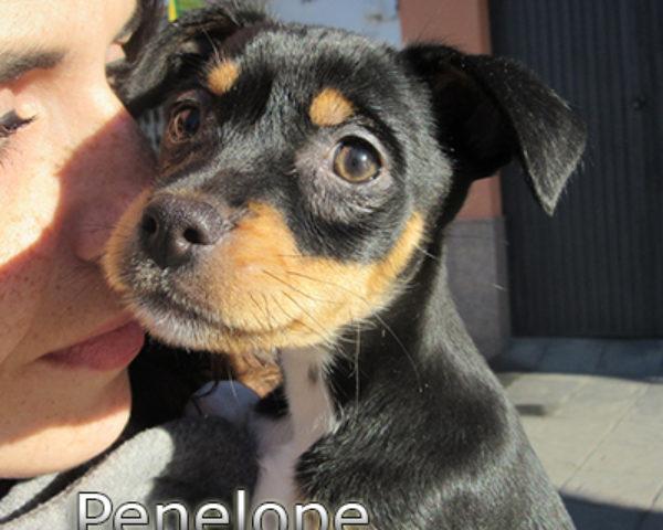 Penelope-(7)web