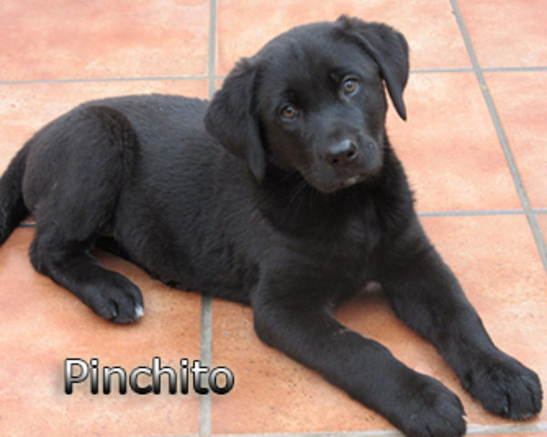 Pinchito-(3)web