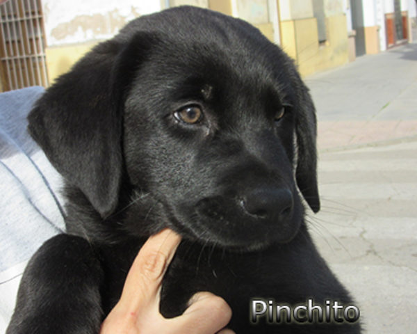 Pinchito-(7)web