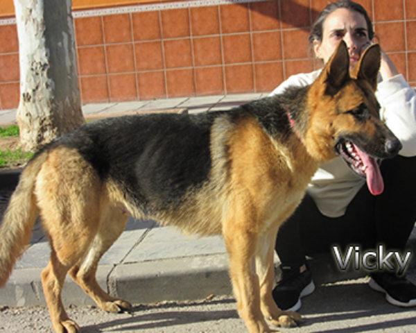 Vicky9